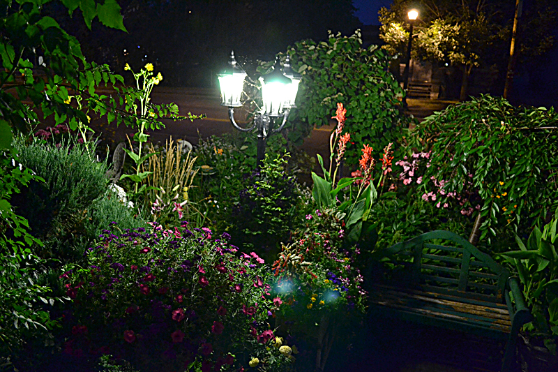 Get a nighttime view of garden that packs many flowers in small ...