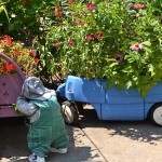 wagon and bed container gardens in Buffalo NY