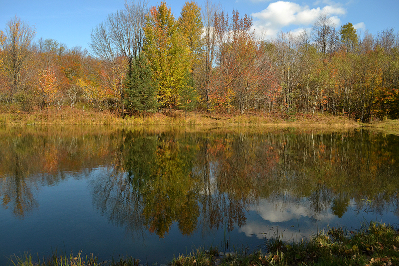 Autumn Reflections 7 in Western New York