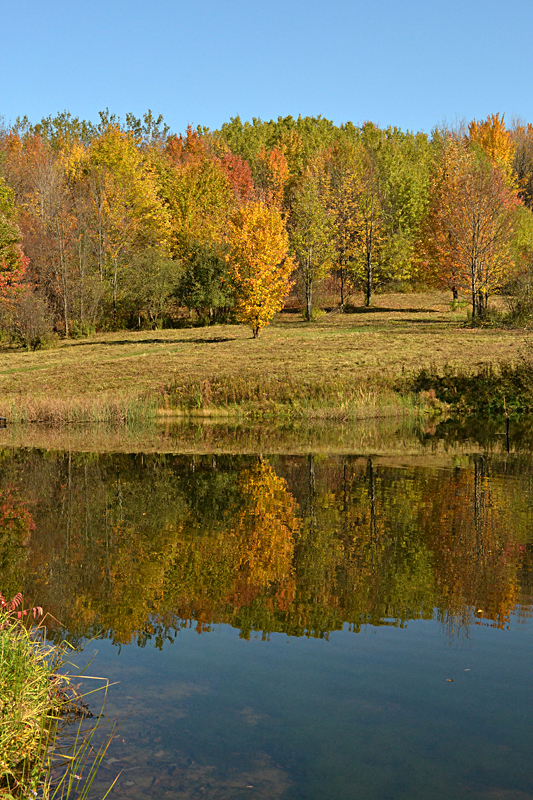 Autumn Reflections 1 in Western New York