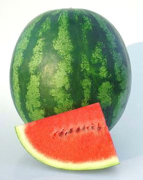Watermelon ShinyBoy from National Garden Bureau