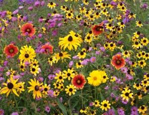 Northeast native flowers from National Garden Bureau