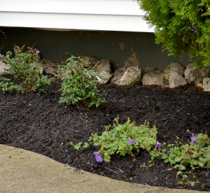 closeup garden makeover in Amherst NY