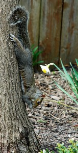 squirrel in Niagara Falls NY from Donna Brok