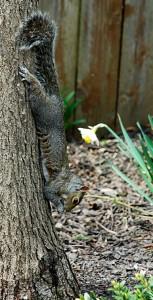 squirrel in Niagara Falls NY from Donna Brok
