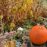 Thanksgiving still life in Amherst NY