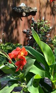 canna lilies by fence in Buffalo NY