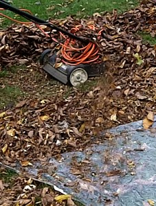 mowing leaves in Amherst NY
