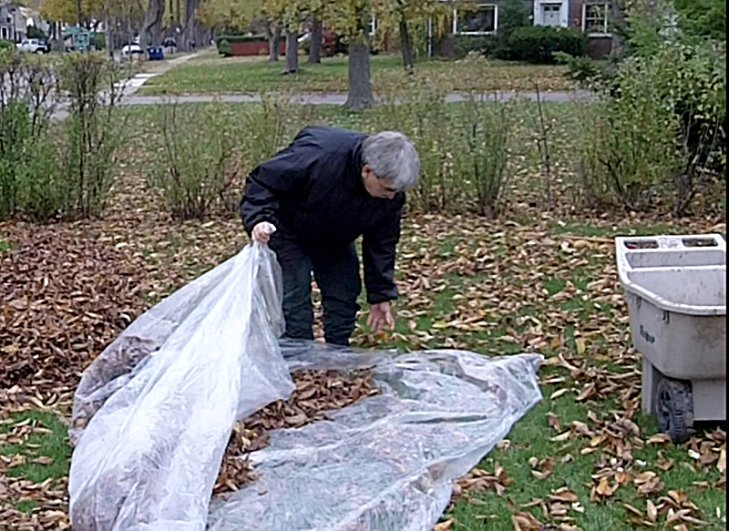 picking up autumn leaves in tarp in Amherst NY