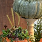 pumpkins with succulents at Lockwoods in Hamburg NY