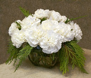 carnations in cube from Mischlers in Amherst NY