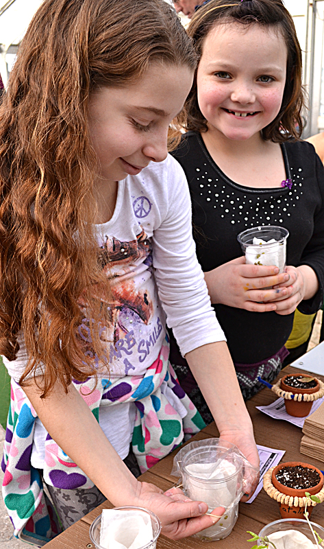 GreysinRose Hall, 8, right, has finished placing mung beans in cup as a first step in growing bean sprouts, and NatalieRose Reid, 10, left, places plastic wrap over her bean sprout planter.