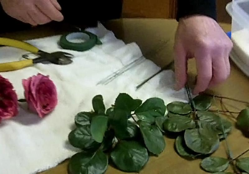 use glycerin to preserve leaves in Buffalo NY