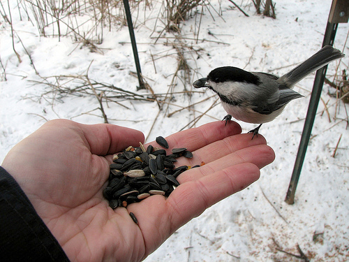 learn to attract and feed birds in Jamestown NY