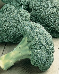 Broccoli from Burpee