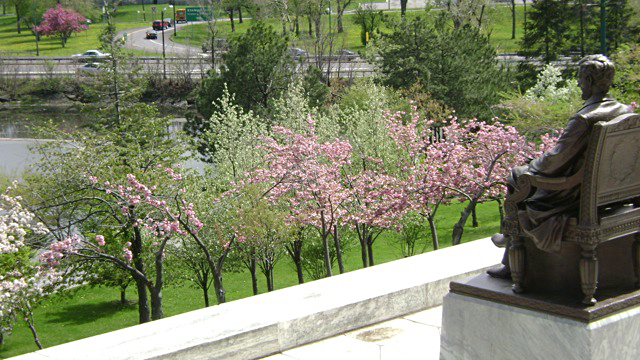 Lincoln statue overlooks cherry blossoms in Japanese Garden of Buffalo