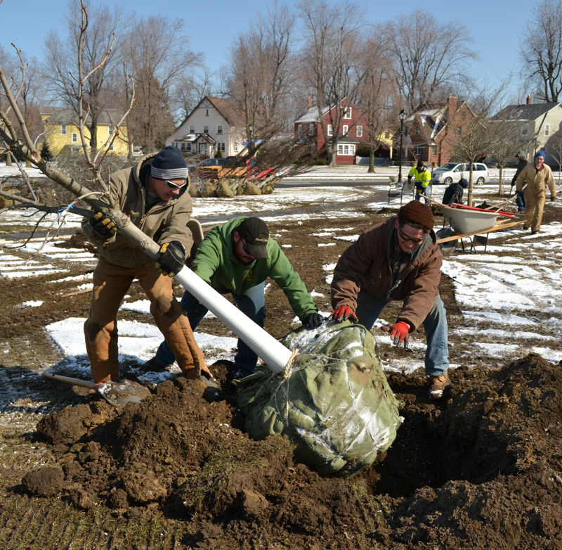 planting the tree LEAF a Legacy 2013