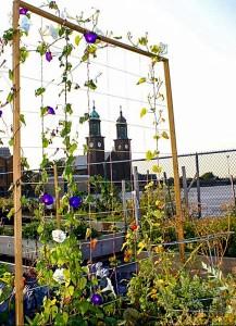 Broadway Market Rooftop Gardens (courtesy P Mangus) in Buffalo NY
