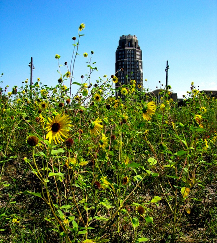 Central Terminal with Sunflowers (courtesy K.McCormick) in Buffalo NY