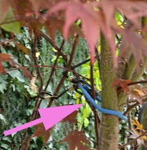 bungee cord in tree Buffalo NY