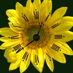 floral clock photo illustration by Connie Oswald Stofko