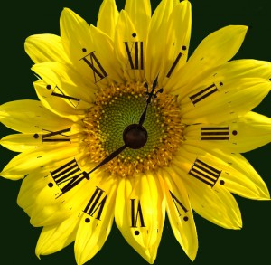 Get 45 Gardening Tips in 45 Minutes in Amherst