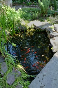 fish pond in backyard on Buffalo NY West Side