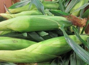 sweet corn from Goodman's Farm Market Niagara Falls
