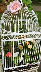 bird cage container garden in Lewiston NY