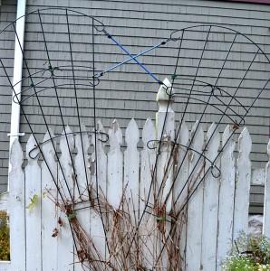 double trellis in garden in Buffalo NY