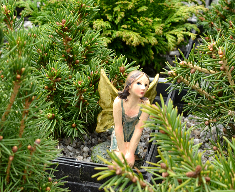 fairy garden workshop in Amherst NY