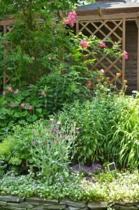 garden outside pergola in Hamburg NY