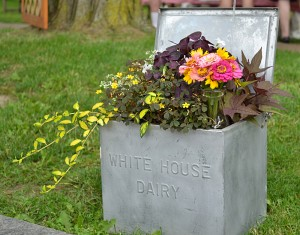 milk box used for container garden in Lewiston NY