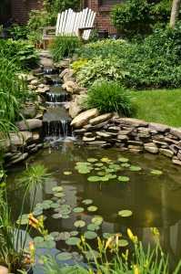 pond with waterfall in Hamburg NY