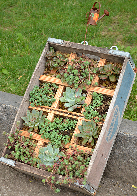 wooden soda pop crate used as container garden