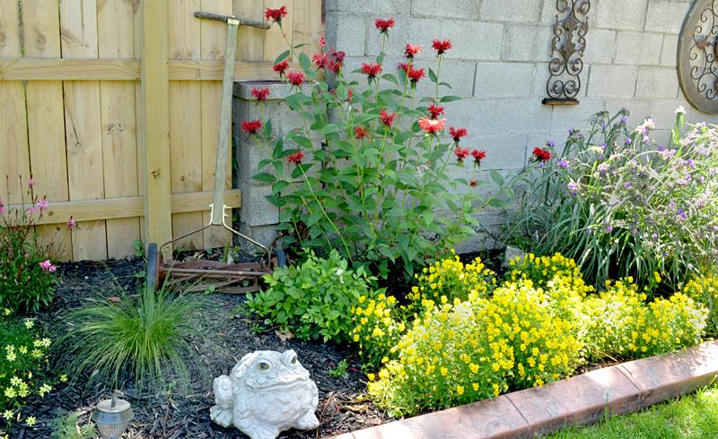 border garden in Niagara Falls NY