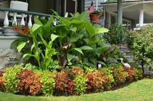 coleus replaces impatiens in front yard on Garden Walk Buffalo 2013