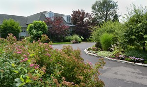 front gardens on Lebrun Road in Amherst NY