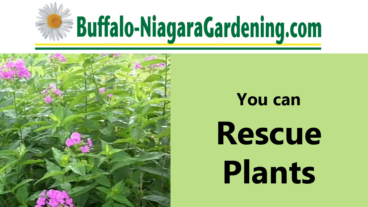 title of video about Williamsville NY woman who rescues plants