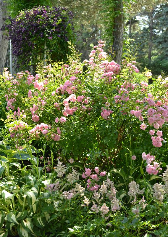 side garden in West Seneca NY
