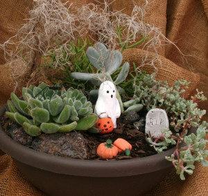Halloween fairy garden at Mischler's in Williamsville NY