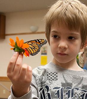 Jamestown Audubon Monarch Festival coming up