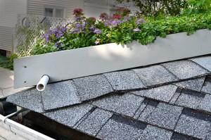 closeup of container garden on garage roof in Tonawanda NY