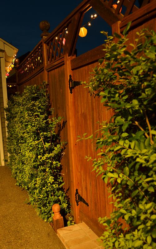 narrow privet growing up fence in Buffalo NY
