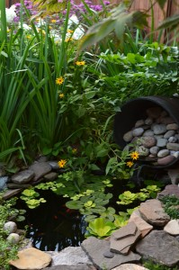 pond in Riverside area of Buffalo NY