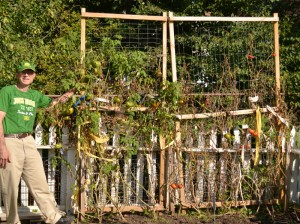 Jim Tammaro with heirloom tomatoes on trellis in Williamsville NY