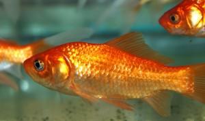 fish courtesy Arbordale in Amherst NY
