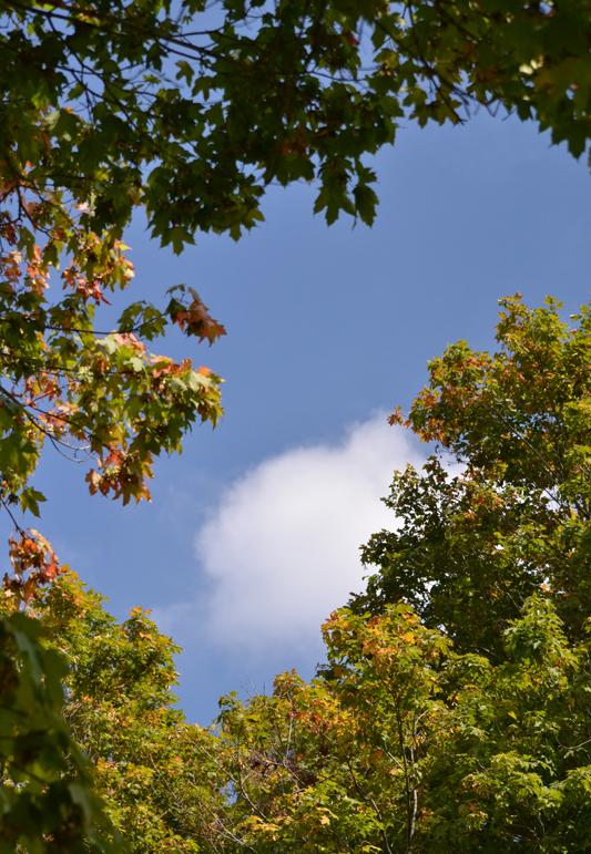 treetops with cloud in Hamburg NY