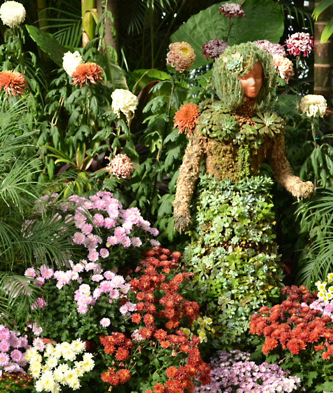 Chrysanthemum Show 2012 at Buffalo Botanical Gardens