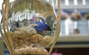 closeup of fish bowl suspended from tree in Buffalo NY